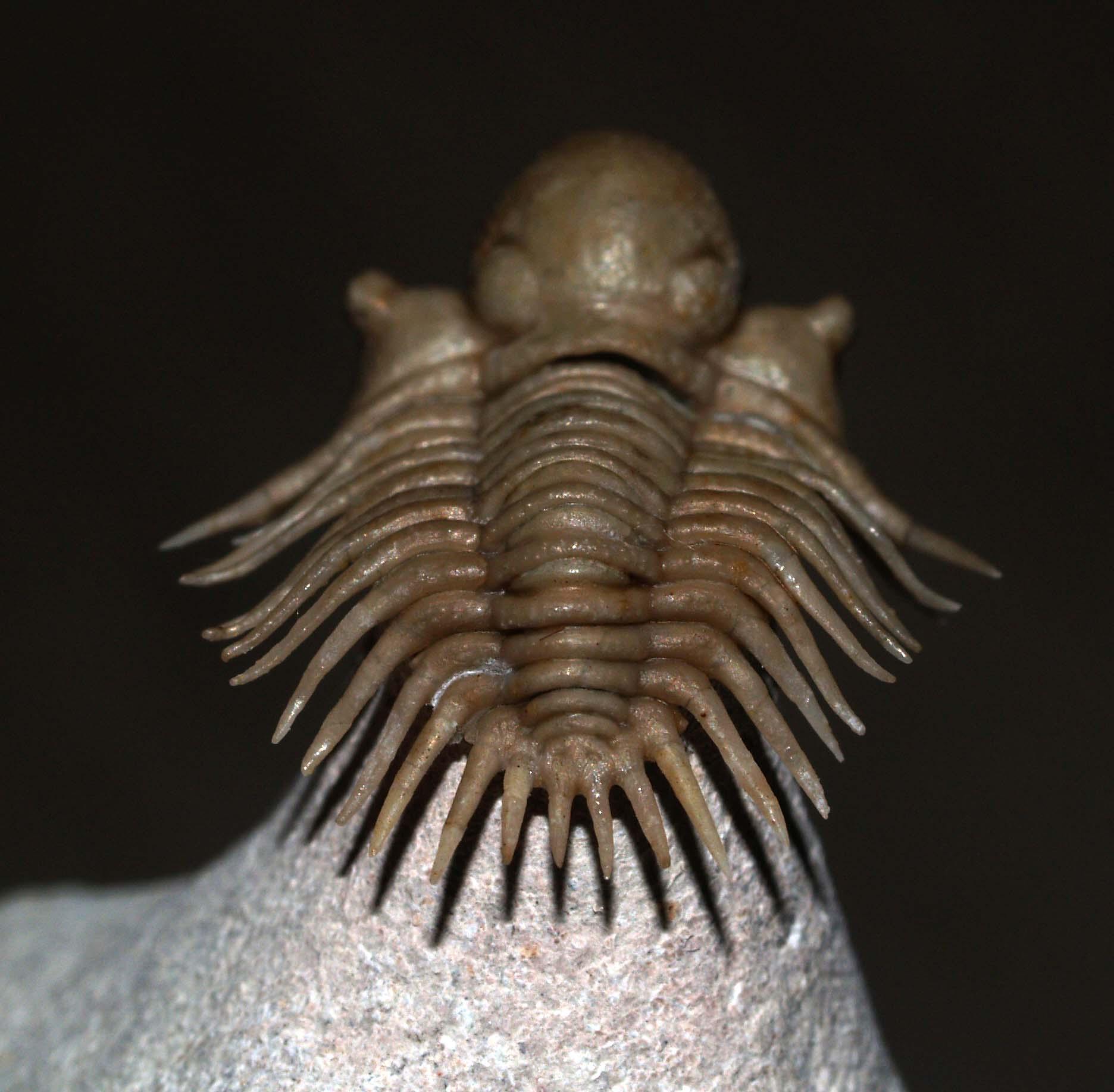 Pseudosphaerexochus pahnschi